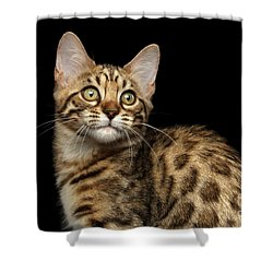 Closeup Bengal Kitty On Isolated Black Background Shower Curtain by Sergey Taran
