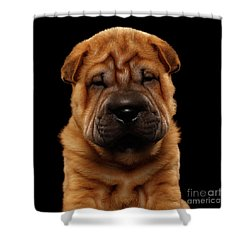 Closeup Funny Sharpei Puppy Isolated On Black Shower Curtain by Sergey Taran
