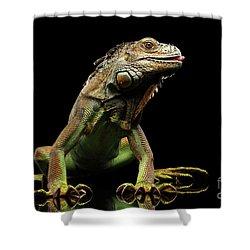Closeup Green Iguana Isolated On Black Background Shower Curtain by Sergey Taran