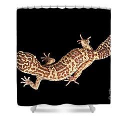 Closeup Leopard Gecko Eublepharis Macularius Isolated On Black Background Shower Curtain by Sergey Taran