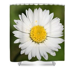 Closeup Of A Beautiful Yellow And White Daisy Flower Shower Curtain by Tracey Harrington-Simpson