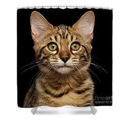 Closeup Portrait Of Bengal Kitty Isolated Black Background Shower Curtain by Sergey Taran