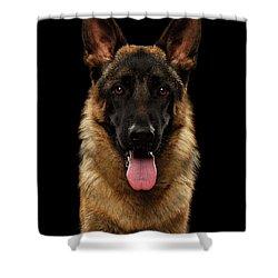 Closeup Portrait Of German Shepherd On Black  Shower Curtain by Sergey Taran