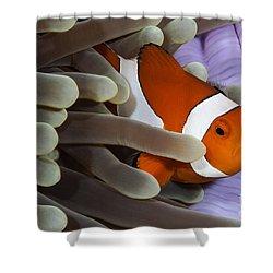 Clown Anemonefish, Indonesia Shower Curtain by Todd Winner