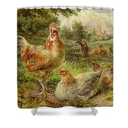 Cochin China Fowls Shower Curtain by George Hickin