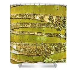 Coconut Palm Bark 1 Shower Curtain by Brandon Tabiolo - Printscapes