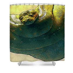 Coiled Shower Curtain by Jack Zulli