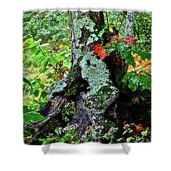 Colorful Stump Shower Curtain by Diana Hatcher