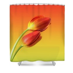 Colorful Tulips Shower Curtain by Wim Lanclus