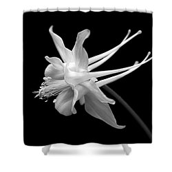 Columbine Flower Portrait Black And White Shower Curtain by Jennie Marie Schell