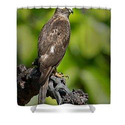 Common Buzzard Buteo Buteo, Bandhavgarh Shower Curtain by Panoramic Images