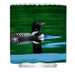 Common Loon In Water, Michigan, Usa Shower Curtain by Panoramic Images