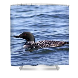 Common Loon Shower Curtain by Teresa Zieba