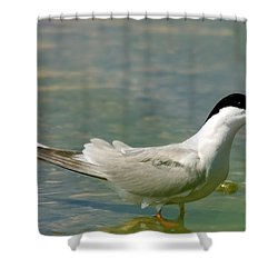 Common Tern Portrait Shower Curtain by Cliff  Norton