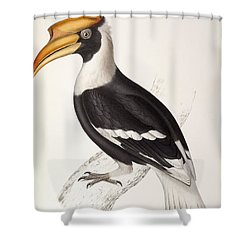 Concave Hornbill Shower Curtain by John Gould