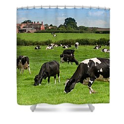 Cow Landscape Shower Curtain by Amanda Elwell