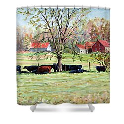Cows Grazing In One Field  Shower Curtain by Richard T Pranke