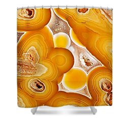 Coyamito  Shower Curtain by Bill Morgenstern