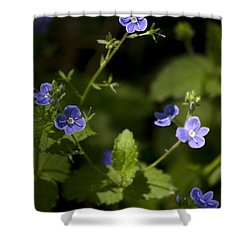 Creeping Speedwell Shower Curtain by Christina Rollo