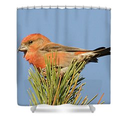 Crossbill Shower Curtain by Judd Nathan