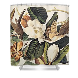 Cuckoo On Magnolia Grandiflora Shower Curtain by John James Audubon