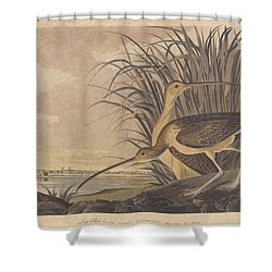Curlew Shower Curtain by John James Audubon