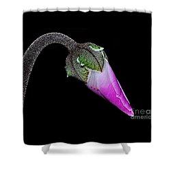 Cyclamen Bud Macro Shower Curtain by Kaye Menner