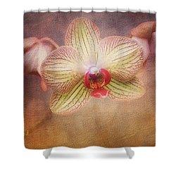 Cymbidium Orchid Shower Curtain by Tom Mc Nemar