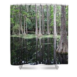 Cypress Swamp Shower Curtain by Carol Groenen