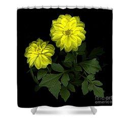 Dahlia Shower Curtain by Christian Slanec