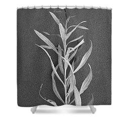 Dahlia Shower Curtain by Skip Hunt