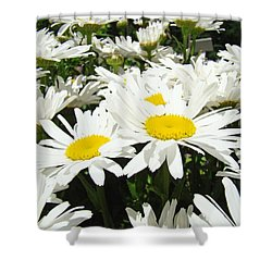 Daisies Floral Landscape Art Prints Daisy Flowers Baslee Troutman Shower Curtain by Baslee Troutman