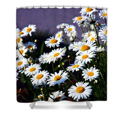 Daisies Shower Curtain by Lana Trussell