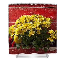 Daisy Plant In Drawers Shower Curtain by Garry Gay