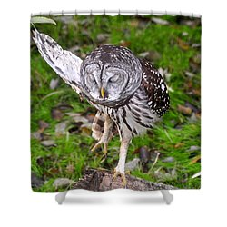 Dancing Owl Shower Curtain by David Lee Thompson