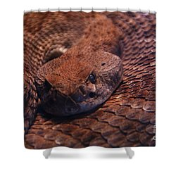 Dangerously Handsome Shower Curtain by Linda Shafer