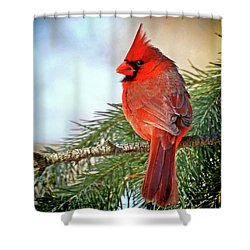 Shower Curtain featuring the photograph December's Cardinal by Rodney Campbell