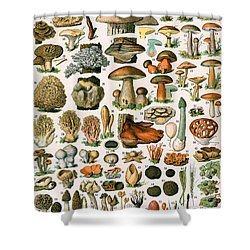 Decorative Print Of Champignons By Demoulin Shower Curtain by American School