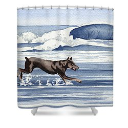 Doberman At The Beach  Shower Curtain by David Rogers