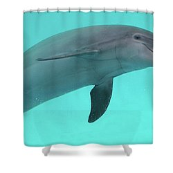Dolphin Shower Curtain by Sandy Keeton