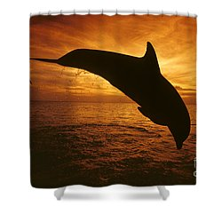 Dolphins And Sunset Shower Curtain by Dave Fleetham - Printscapes