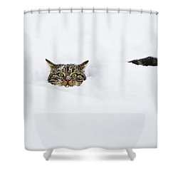 Domestic Cat Felis Catus In Deep Snow Shower Curtain by Konrad Wothe