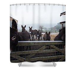 Donkeys Shower Curtain by Dawn OConnor