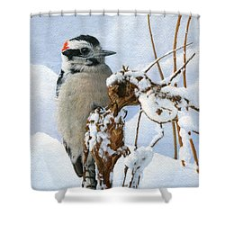 Downy Woodpecker  Shower Curtain by Ken Everett