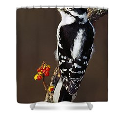 Downy Woodpecker On Tree Branch Shower Curtain by Panoramic Images