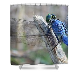 Dragonfly Wing Detail Shower Curtain by Carol Groenen