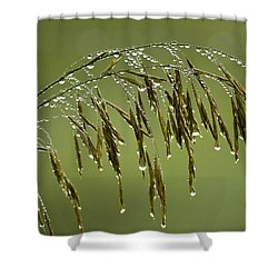 Drops Of Water On Grass Shower Curtain by Christina Rollo