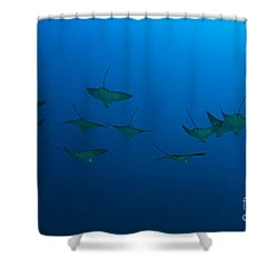Eagle Rays In Ocean Shower Curtain by Dave Fleetham - Printscapes