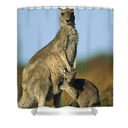 Eastern Grey Kangaroo And Her Joey Shower Curtain by Ingo Arndt