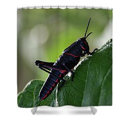 Eastern Lubber Grasshopper Shower Curtain by Richard Rizzo